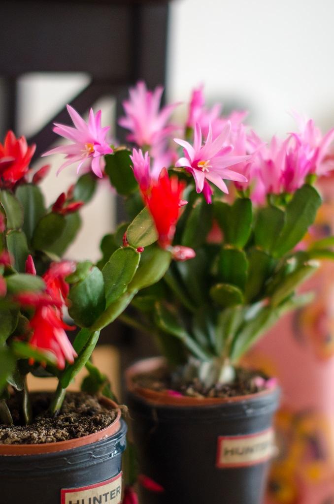 Hunter Gummistiefel bepflanzen Deko Blumen