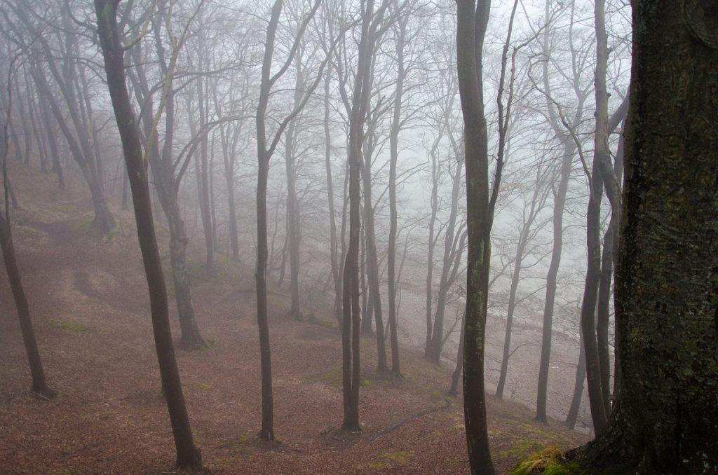 Binz Sellin Gummistiefel Wald