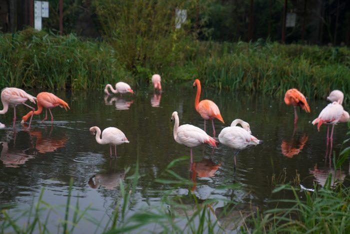 Niendorf Vogelpark Ostsee Travemünde