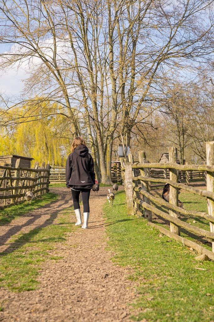 Haustierpark Lelkendorf Truthahn Pute